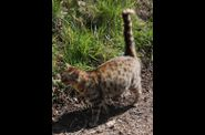 Photo animal domestique - chat