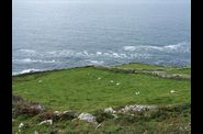 dingle-beehive-sheep2.jpg