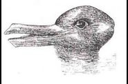 illusion-canard-lapin