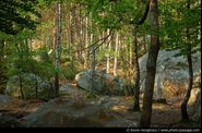 foret-fontainebleau-barbizon