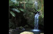 rainforest-el-yunque.jpg