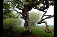 Arbre-remarquable-Roosberg---1--.jpg