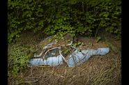 Peter Lippmann - Paradise Parking-04