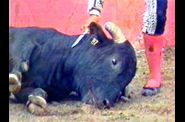 bullfighting2.jpg
