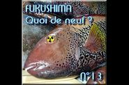 FUKUSHIMA - Actualités en direct - informations l-copie-11