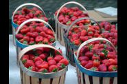 Fraises de Carpentras au march provenal