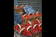 Fraises de Carpentras