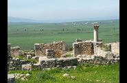 Volubilis 5