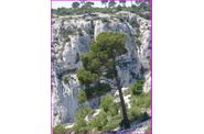 03-Calanques-En-Vaux--065.jpg