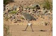 030-namibie-orange-river-heron.jpg