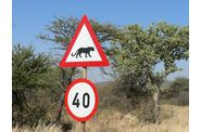 088-namibie-route-okanjima-attention-felin.jpg