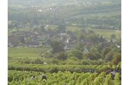 Vendanges-2009--2-00250.jpg