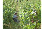 Vendanges-2009--2-00255.jpg