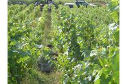 Vendanges-2009--2-00256.jpg
