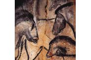 Grotte Chauvet cheveaux