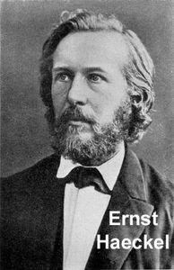 Ernst_Haeckel_1860.jpg