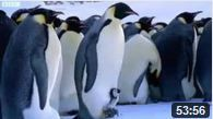 pingouins-manchot-bbc-documentaire.JPG