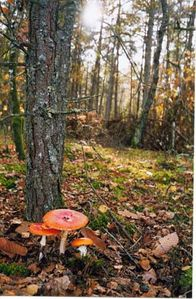 4171-champignons-zoom[1]