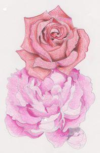 dessin-rose-et-pivoine.jpeg