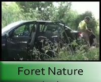 Foret Nature