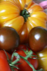 Tomates-colorees--44-.JPG
