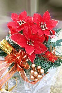 Weihnachtsstern1