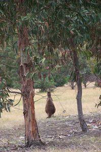 de-dos-kangourou.JPG