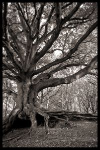 Blasted Oak by grimleyfiendish