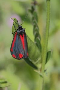 papillons1506