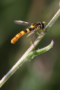 insectes2420