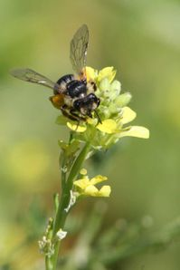 insectes2535 1