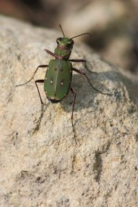 insectes4284