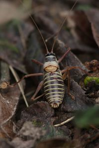 insectes 0129