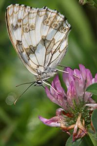 papillons2173