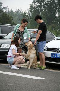 actions-pour-les-chiens-de-grande-taille-Pekin 0067