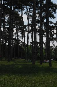 Proust Bois de Boulogne