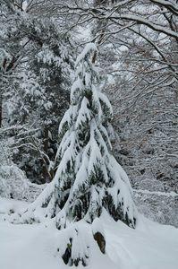 Douceur-hivernale 0152
