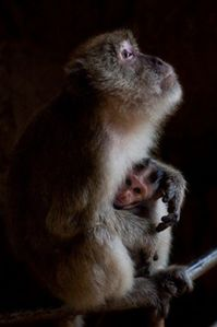 macacque-with-child.jpg