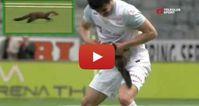 fouine-football-mord-joueur-suisse-thoune.JPG