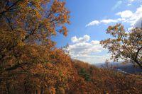 Fall-Time 5251