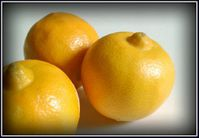 Citrons-bergamote-copie-1.jpg
