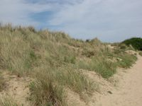 Cabourg dunes 2