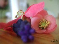 11-mars-30-Fleurs-5