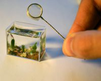 micro-mini-aquarium.jpg