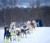 13 chiens prets au-depart