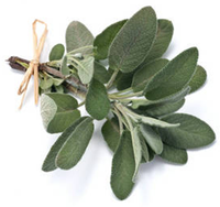 sauge-officinale---branche.png
