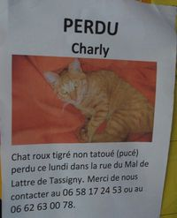 chat rosny sous bois