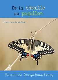 de-la-chenille-au-papillon