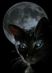 yeux-de-chat-la-nuit.jpg