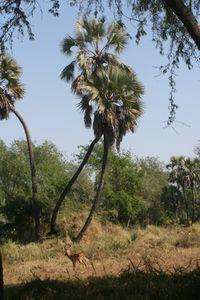 Gorongosa anne 015